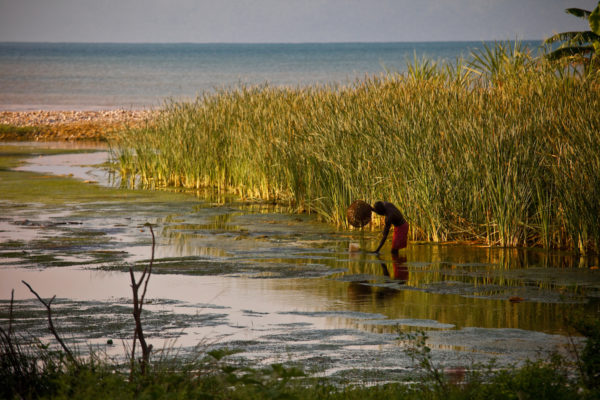 A man farms seaweed near Port Salud on the Tiburon peninsula, Haiti